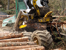 Mechanical cutting of trees in a forest Royalty Free Stock Image