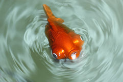 Mechanical goldfish 2 Stock Photo
