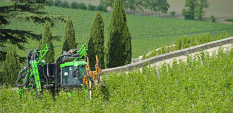 Mechanical Grape Harvest.Trimming and topping Stock Images