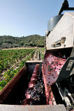 Mechanical grape harvest in a vineyard Royalty Free Stock Images