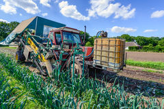 Mechanical harvesting of leeks in a sunny field Royalty Free Stock Photo