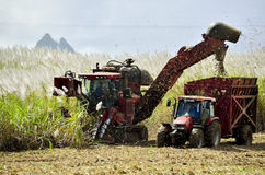 Mechanical harvesting of sugar cane - Mauritius Stock Image