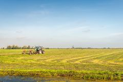 Mechanical hay tedding and ridging in a Dutch polder landscape. On a sunny day in with a bright blue sky the beginning of the fall season. In the background a royalty free stock photography