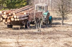 Mechanical loading and transportation of pine wood using a tractor royalty free stock images