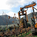 Mechanical pruning of plants in a vineyard Royalty Free Stock Photo