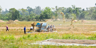 Mechanical rice threshing Royalty Free Stock Photo