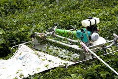Mechanised Tea Leaf Harvester Stock Photos