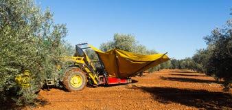 Mechanisierte Sammlung Oliven lizenzfreie stockfotos