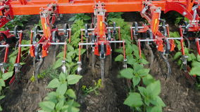 The mechanism cuts the weeds between the neat rows of sunflower. Top view stock video footage