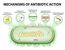 Mechanismen der Aktion der Antibiotika stock abbildung