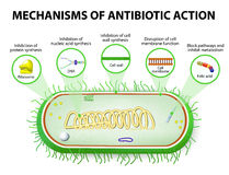 Mechanisms of Action of Antimicrobials Royalty Free Stock Photos