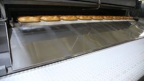 Mechanized Bakery. Bread on a conveyor. Bread bakery food factory production with fresh products stock video footage