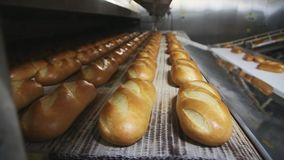 Mechanized Bakery. Production of bread stock footage