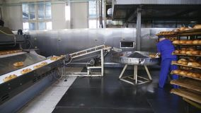 Mechanized Bakery. Production of bread stock video footage