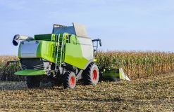 Mechanized harvesting of fodder maize. Combine harvester in action when harvesting and chopping the cutting maize on a large Dutch plot. The combine harvester Stock Photo
