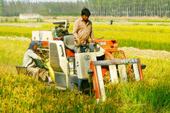 Mechanized harvesting rice Stock Photo