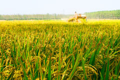 Mechanized harvesting rice Royalty Free Stock Photography
