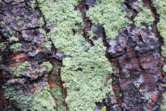 Mechata drzewna barkentyna obraz royalty free