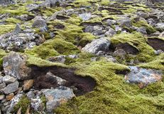 Mechate law skały w Iceland Fotografia Stock
