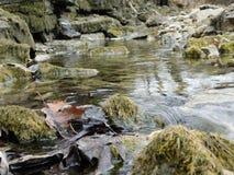 Mechate skały i strumień w Kansas fotografia royalty free