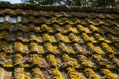 Mechaty dach hovel w ogródzie obraz stock