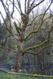 Mechaty drzewo w słońcu Zdjęcia Royalty Free