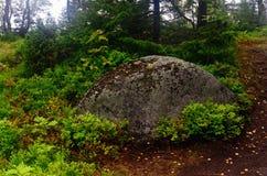 Mechaty głaz w drewnach na Solovki Zdjęcia Royalty Free