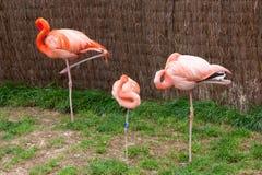 Mechelen, België - 17 Mei 2016: Flamingo's in Planckendael-dierentuin royalty-vrije stock foto's