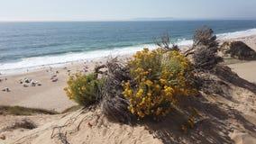 Meco strand i Portugal stock video
