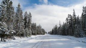 Med is Asphalt Road Leads Through Forest för två gränd vintertid royaltyfria foton