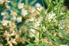 Med blommor Royaltyfri Bild