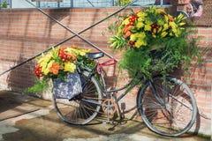 Med dekorerade blommor cykla parkerat mot en vägg av en greenh fotografering för bildbyråer