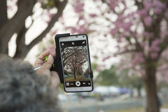 Med den rosa blommatelefonklockan Fotografering för Bildbyråer