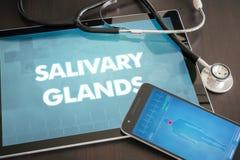 Med di diagnosi delle ghiandole salivare (malattia gastrointestinale riguardante) immagine stock libera da diritti