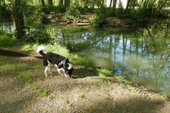 Med hunden i parkera Arkivfoto