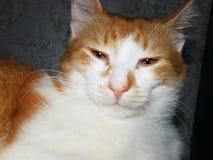 Med polisonger tysta ned kattskotthemmet Arkivbild
