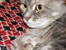 Med polisonger tysta ned kattskotthemmet Arkivbilder