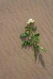 Med steg bara på stranden Royaltyfria Bilder