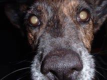 med textsidan upp tät hund Fotografering för Bildbyråer