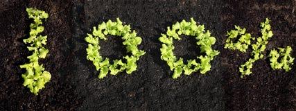 100% med växande grönsallat Fotografering för Bildbyråer