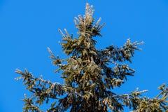 Med is vinterträd Royaltyfria Bilder
