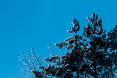 Med is vinterträd Royaltyfri Fotografi