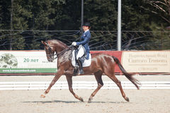 Medalist Marina Aframeeva horse named Vosk. International Dressage in International Horse Park Rus Vivat, Russia! Orlovo, Moscow region. Final day 22 june 2014 Stock Photography