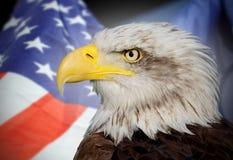 Bli skallig örnen och USA Royaltyfria Foton
