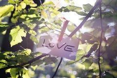 Meddelande av förälskelse i natur Arkivfoton