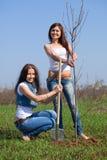 Medelålderkvinnor som planterar treen Fotografering för Bildbyråer