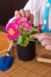 Medelålders kvinna som tar omsorg av blomman Arkivbilder