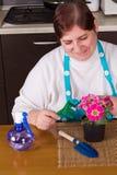 Medelålders kvinna som tar omsorg av blomman Arkivbild