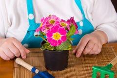 Medelålders kvinna som tar omsorg av blomman Fotografering för Bildbyråer