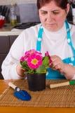 Medelålders kvinna som tar omsorg av blomman Arkivfoto